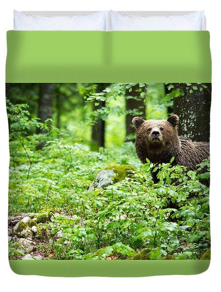 Brown Bear In Slovenia Duvet Cover