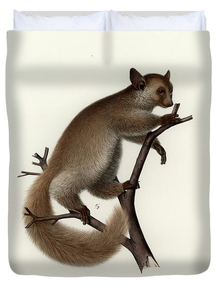 Brown Greater Galago Or Thick-tailed Bushbaby Duvet Cover