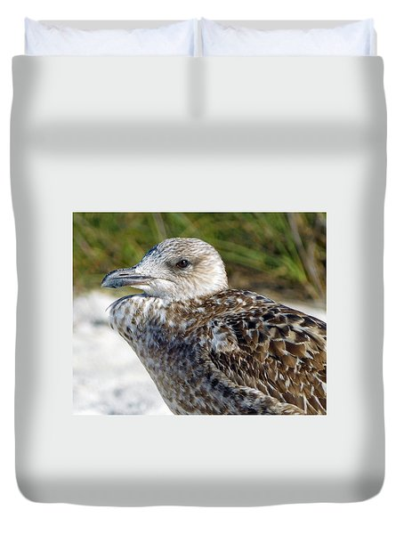 Brown Gull At Wiggins Pass Duvet Cover