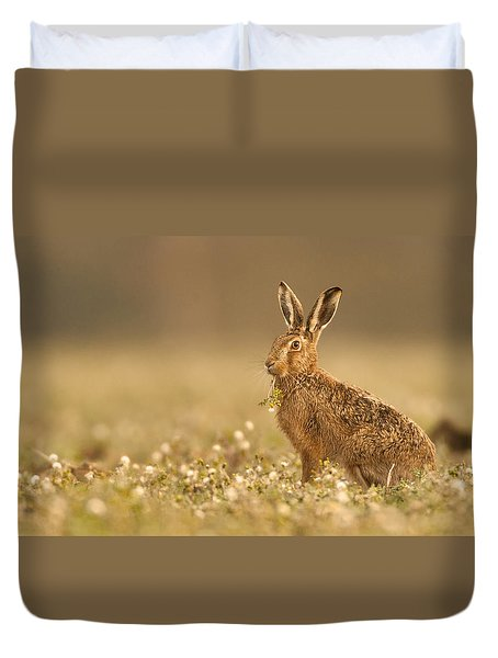 Brown Hare  Duvet Cover