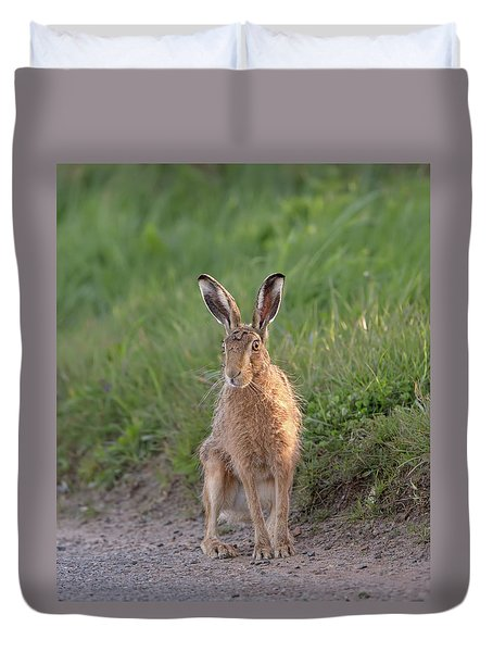 Brown Hare Sat On Track At Dawn Duvet Cover