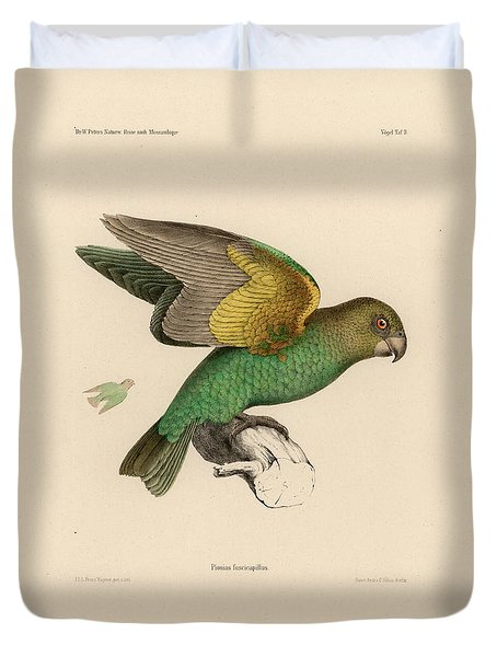 Brown-headed Parrot, Piocephalus Cryptoxanthus Duvet Cover
