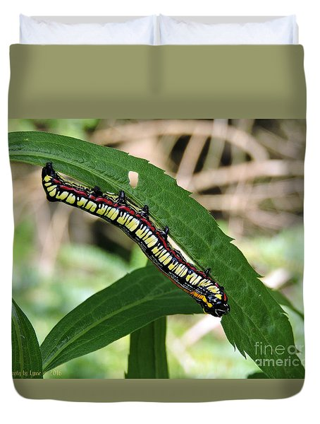 Brown Hooded Owlet Moth Larva  Duvet Cover
