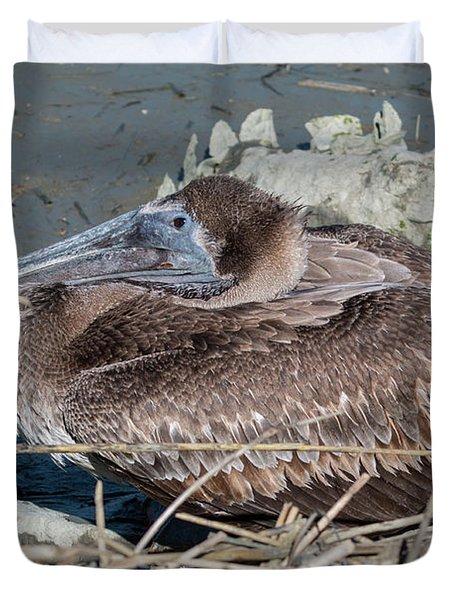 Brown Pelican 3 March 2018 Duvet Cover