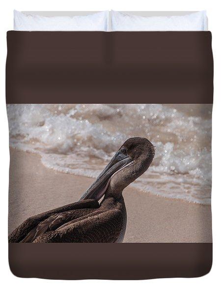 Brown Pelican On Las Bachas Beach Santa Cruz Indefatigable Island  Galapagos Islands Duvet Cover