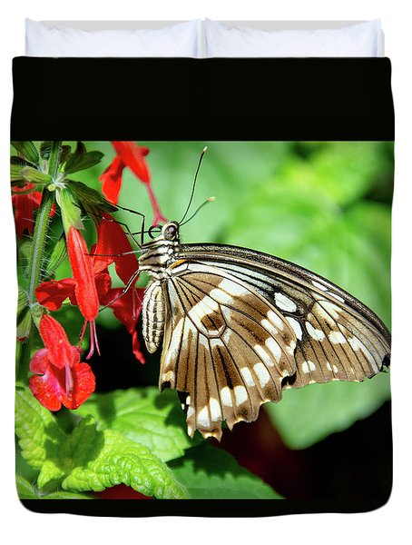 Brown Swallowtail Butterfly Duvet Cover