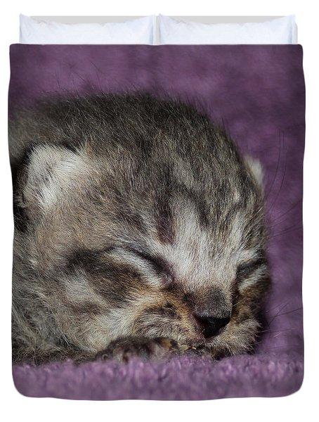 Brown Taby Scottish Fold Kitten 2 Duvet Cover