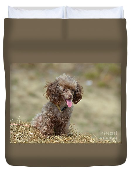 Brown Toy Poodle On Bail Of Hay Duvet Cover