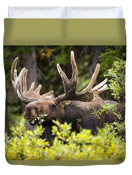 Duvet Cover featuring the photograph Browser by Aaron Whittemore