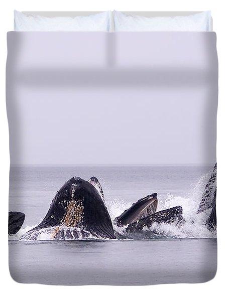 Bubble Feeding Humpbacks Duvet Cover by Darcy Michaelchuk