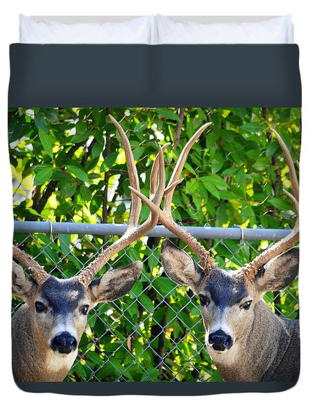 Buck Eyes Duvet Cover