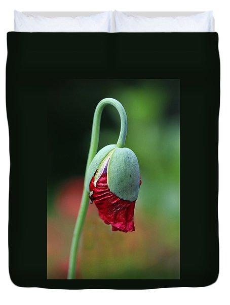 Budding Poppy Duvet Cover by Shirley Sirois