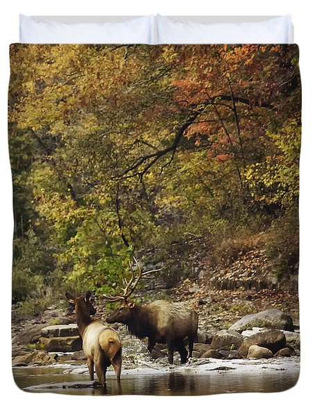 Bull And Cow Elk In Buffalo River Crossing Duvet Cover