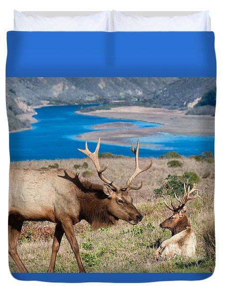 Bull Elk Above Tomales Bay Duvet Cover