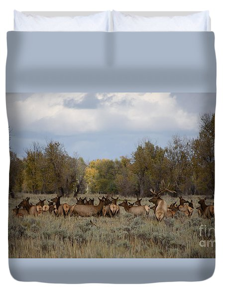 Bull Elk And Harem Duvet Cover