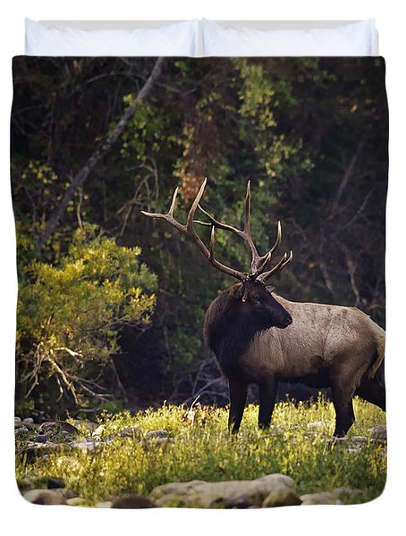 Bull Elk Checking For Competition Duvet Cover by Michael Dougherty