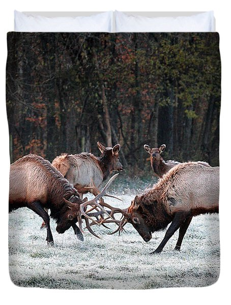 Duvet Cover featuring the photograph Bull Elk Fighting In Boxley Valley by Michael Dougherty