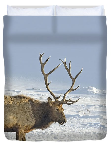Bull Elk In Snow Duvet Cover