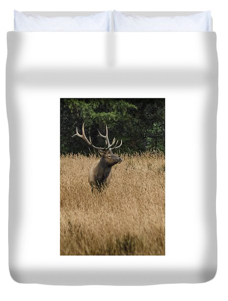 Bull Elk In Yellowstone Duvet Cover