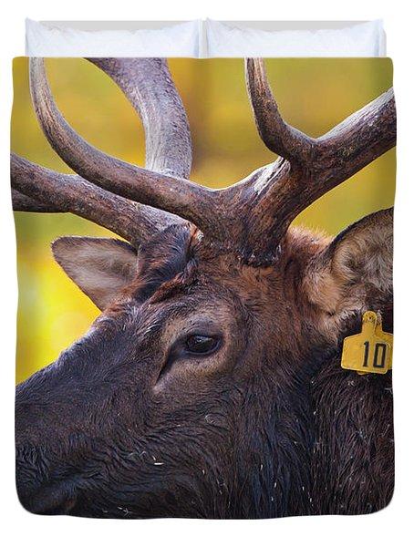 Bull Elk Number 10 Duvet Cover