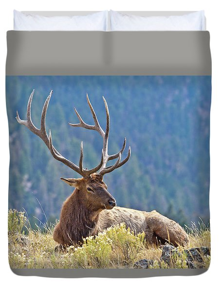 Duvet Cover featuring the photograph Bull Elk Resting by Wesley Aston