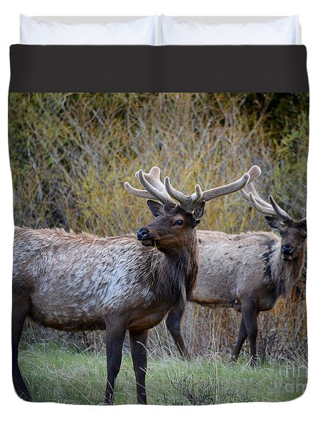 Bull Elk Rocky Mountain National Park Duvet Cover