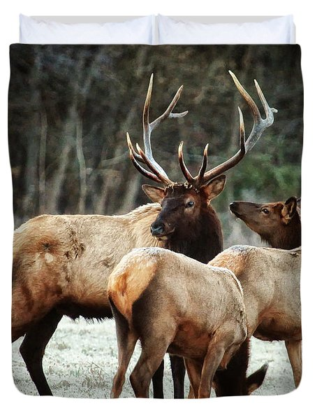 Bull Elk With Cows In The Late Rut Duvet Cover