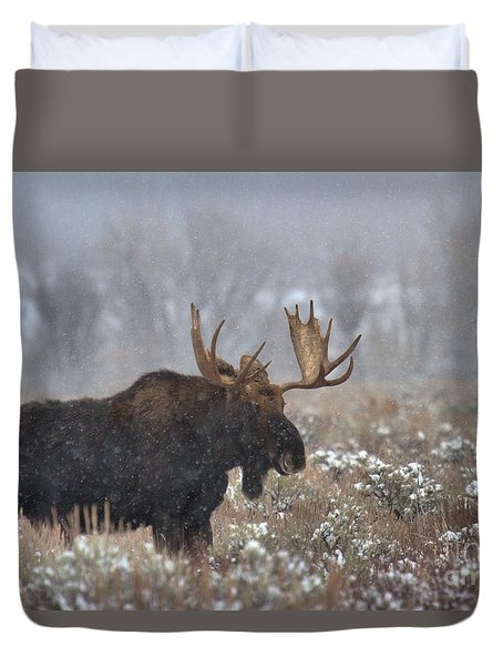 Duvet Cover featuring the photograph Bull Moose In The Fog by Adam Jewell