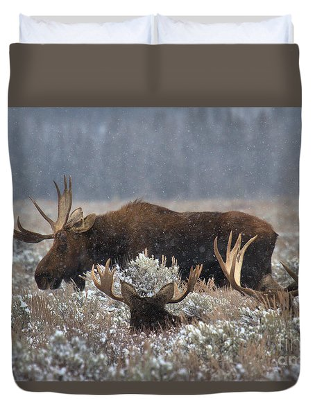 Duvet Cover featuring the photograph Bull Moose In The Snowy Meadow by Adam Jewell