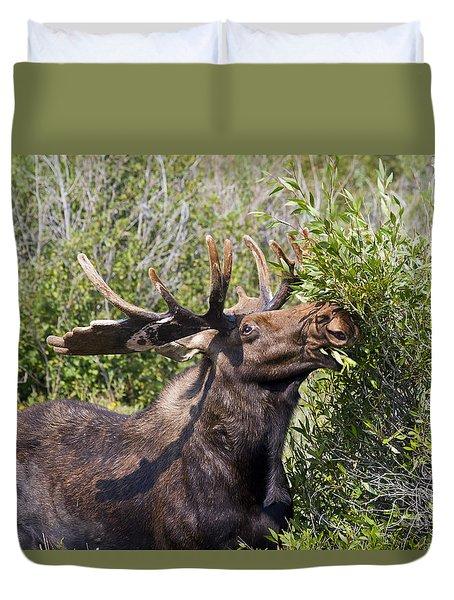 Bull Moose Duvet Cover by Teresa Zieba
