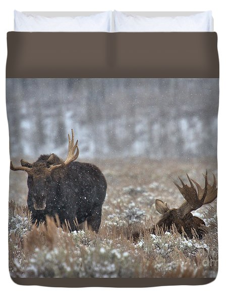 Duvet Cover featuring the photograph Bull Moose Winter Wandering by Adam Jewell