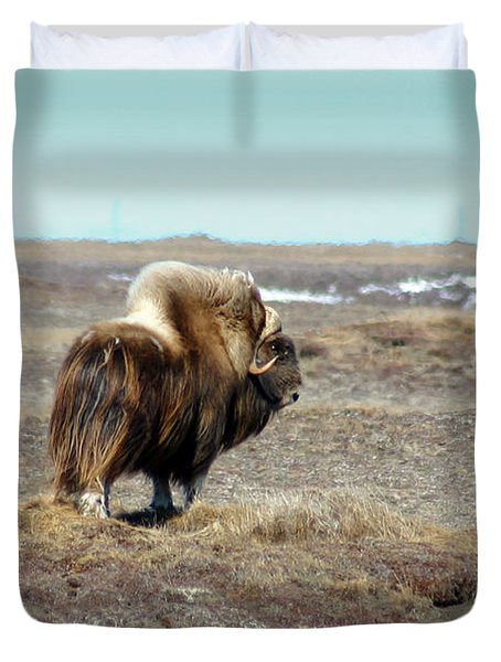 Bull Musk Ox Duvet Cover by Anthony Jones