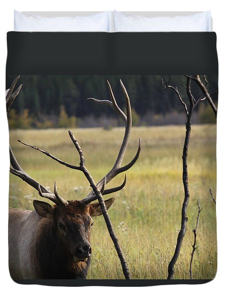 Bullelk2 Duvet Cover