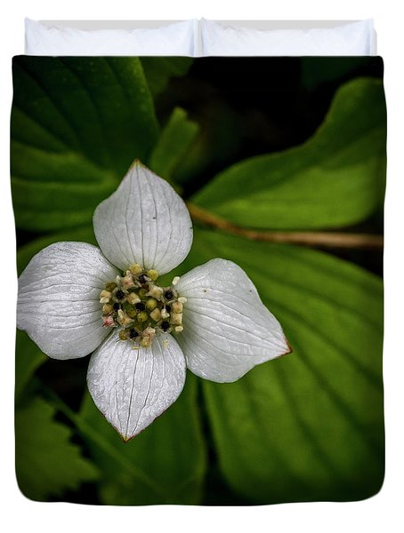Duvet Cover featuring the photograph Bunchberry Dogwood On Gloomy Day by Darcy Michaelchuk