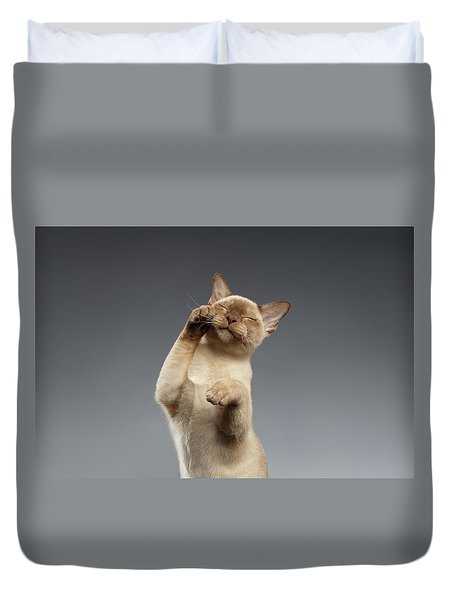 Burma Cat Paws Snout Covers On Gray Duvet Cover