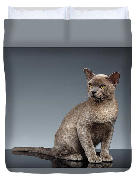 Burma Cat Sits And Loocking Up On Gray Duvet Cover