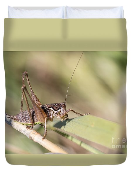 Bush Cricket Duvet Cover