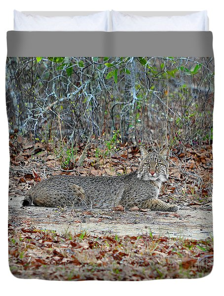 Duvet Cover featuring the photograph Bushed Bobcat by Al Powell Photography USA