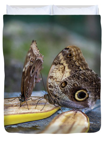Duvet Cover featuring the photograph Butterflies Eating Bananas by Raphael Lopez