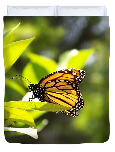 Duvet Cover featuring the photograph Butterfly In Sunlight by Carol  Bradley