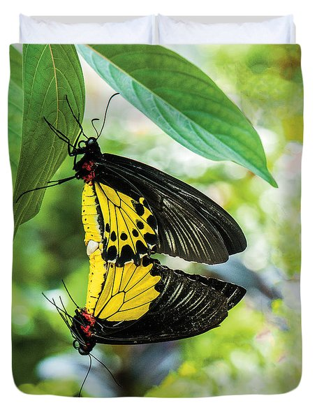Butterfly Mating Duvet Cover