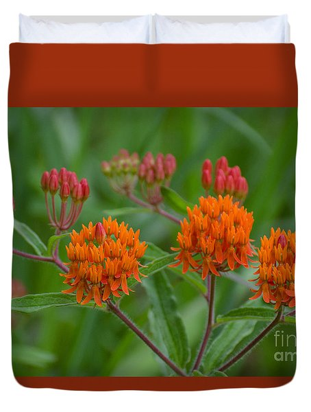 Duvet Cover featuring the photograph Butterfly Weed by Donna Brown