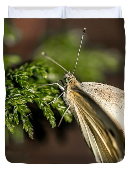 Cabbage Butterfly On Evergreen Bush Duvet Cover
