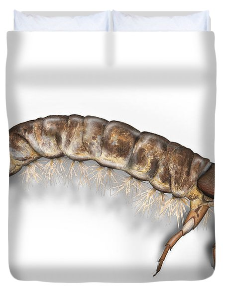 Caddisfly Larva Nymph Psychomiidae Hydropsyche Pellucidula -  Duvet Cover