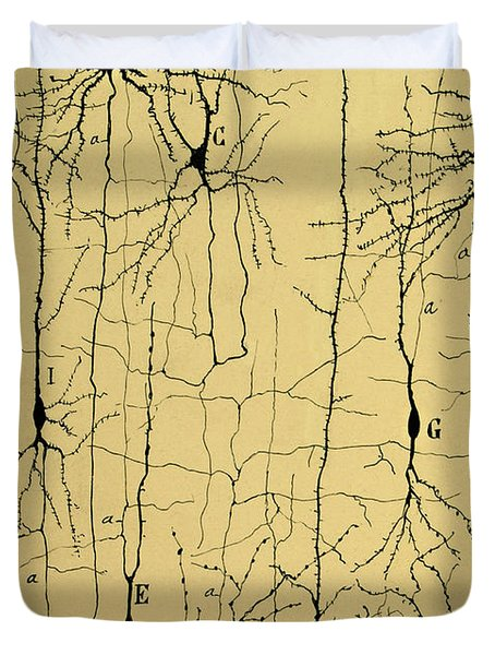 Cajal Drawing Of Microscopic Structure Of The Brain 1904 Duvet Cover by Science Source