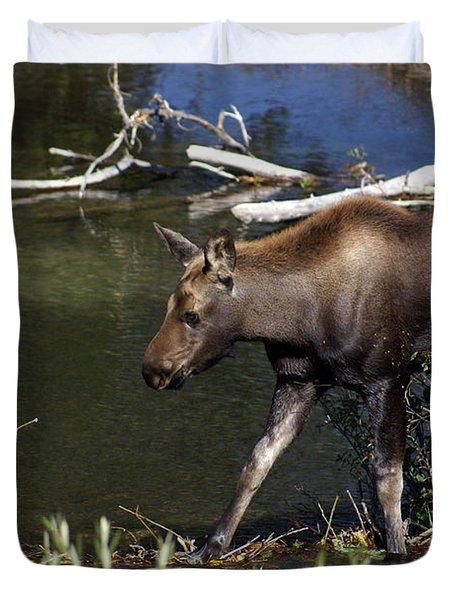 Calf Moose Duvet Cover by Marty Koch