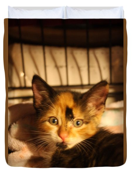 Calico Kitten Duvet Cover by Wendy Coulson