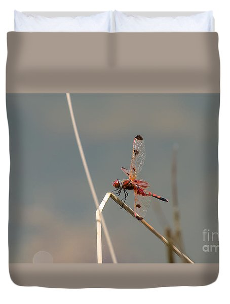 Calico Pennant Male Duvet Cover by Donna Brown