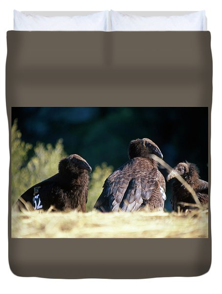 California Condors Duvet Cover