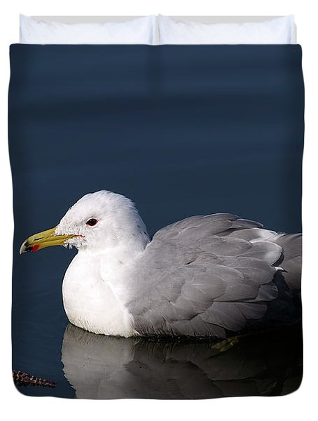 Duvet Cover featuring the photograph California Gull by Sharon Talson